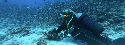 Woman Scuba Diving With A Massive School Of Fish